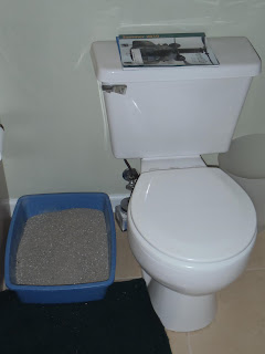 Bagheera the Diabetic Cat uses the litter box when his human uses the toilet