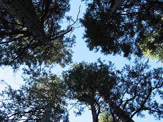 Arboros di Dark Canyon