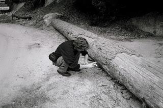 Mi fotògrafanta formicos