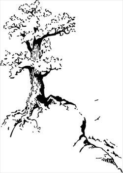 Vancouver Island Big Trees: Quotes