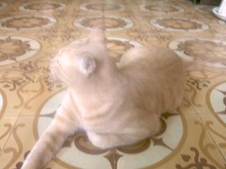 Cái Tết của Mèo béo