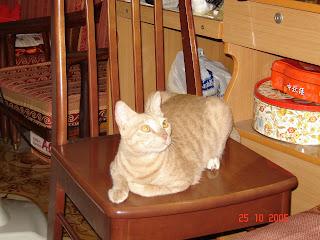 Mèo béo một năm trước