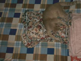 Mèo béo đang phá phách trên giường