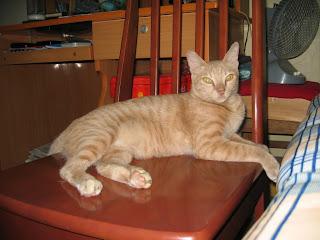 Mèo béo đáng yêu