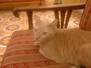 Mèo béo hôm Tết 2007