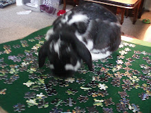 Benji helping with puzzle