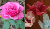 Real and artificial roses
