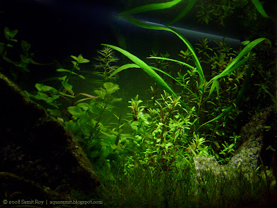 Aquarium and aquascapes of Samit Roy