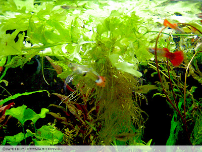 Samit's planted tank and photographs