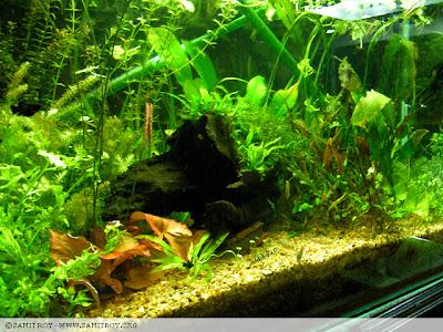 Aquariums of Samit Roy - Graphics Designer and Digital Artist