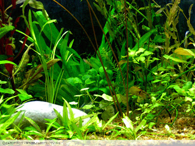 Nature Aquariums and Aquascapes by Samit Roy