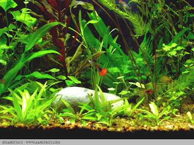 Nature Aquariums and Aquascapes by Samit Roy - Graphic Designer and Digital Artist