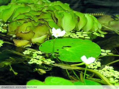 Planted Aquarium of Samit Roy - Digtal Artist and Aquascape Designer