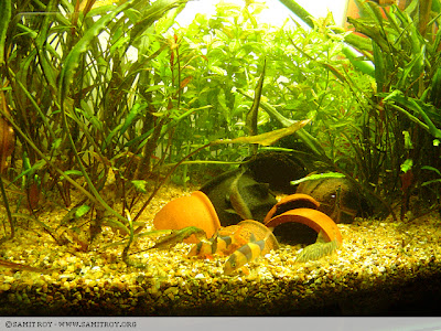 Samit's FIsh tank's photograph