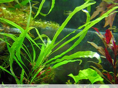 Samit's Fish Tank