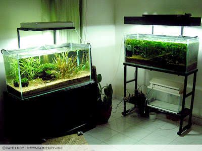 Samit's Fish Room