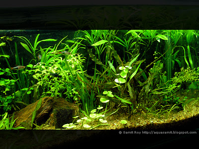 Cretive Aquascape