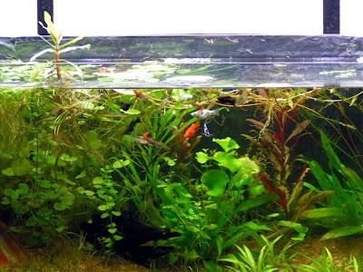Nature Tank