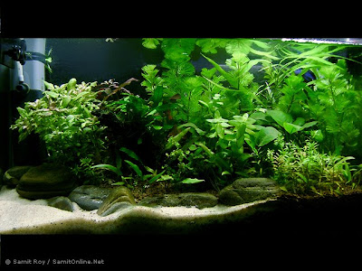 Creative Aquascape BY Samit Roy