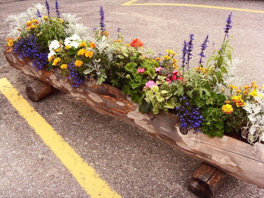 Le minis di cockerina aiuto ho bisogno di fiori for Fiori ornamentali