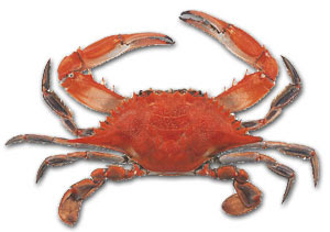 Acne-Treatment-Crab