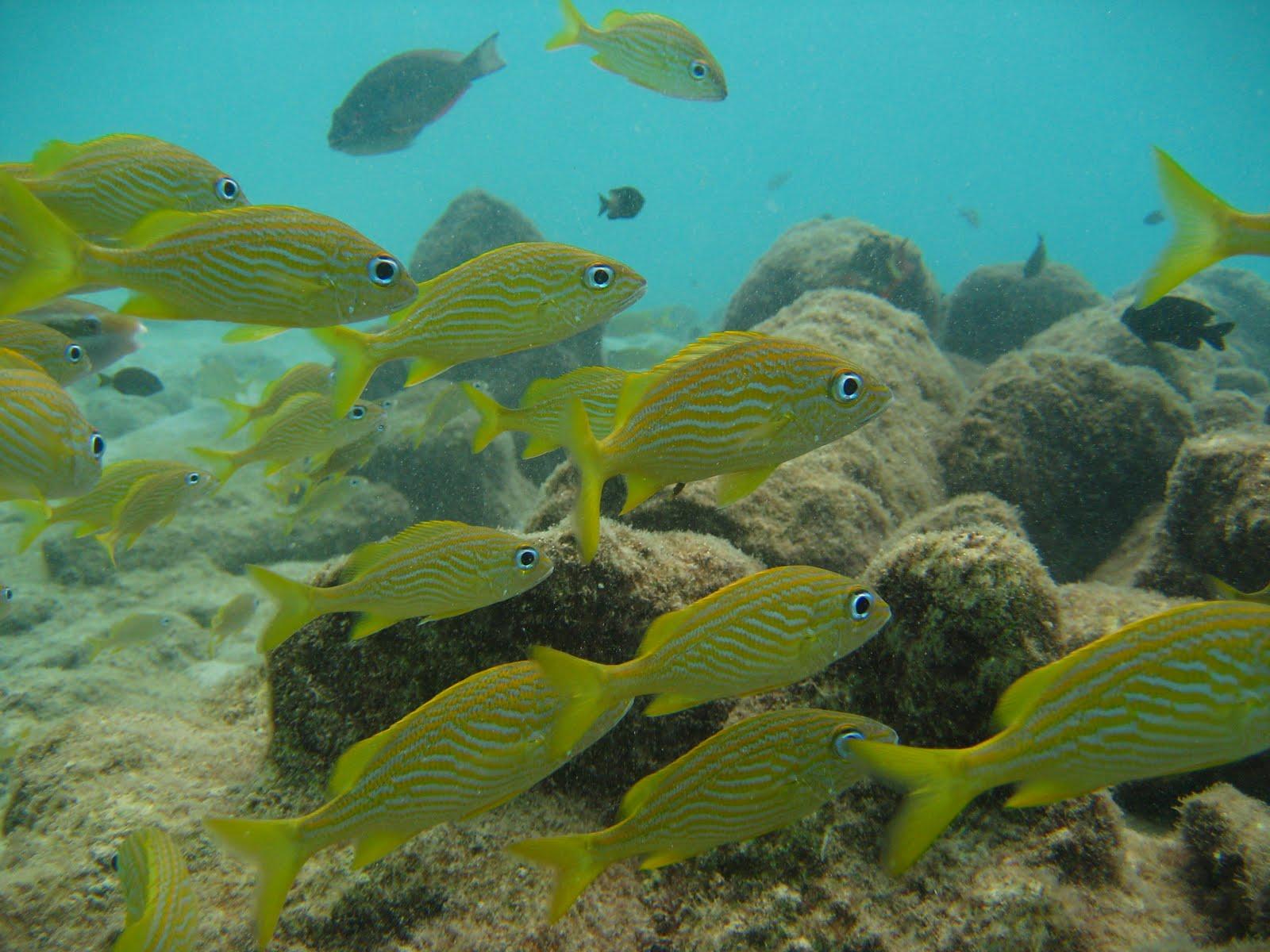 vissen koraalrif curacao