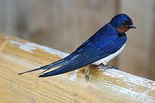 Resultado de imagem para pluma azul