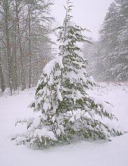 Snow January 2010 #3