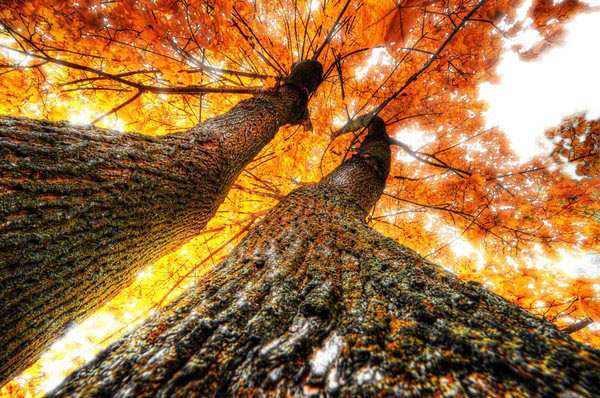 Beautiful Hdr Trees Photography