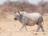 [ZBN1487:1+Rhino.jpg]