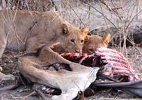 [Edgar:3+lion+kill.jpg]