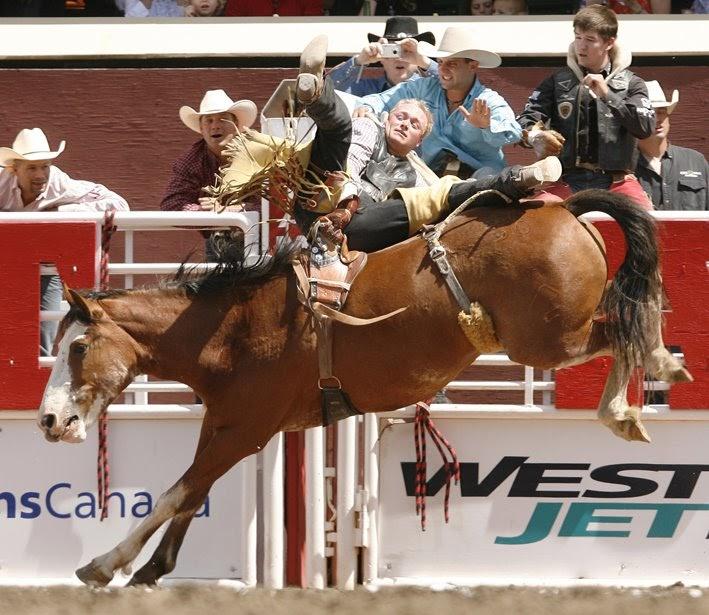 Equids Calgary Stampede Rodeo