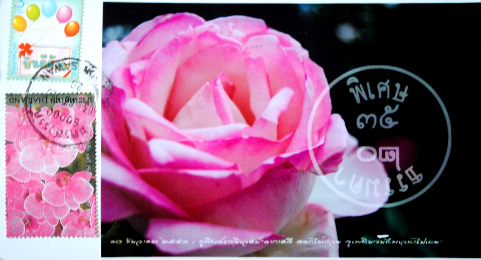 róże tajlandia