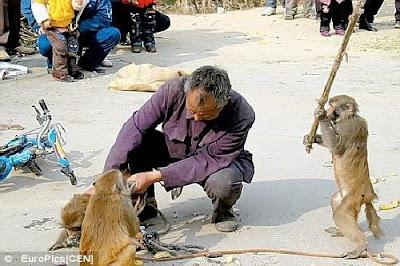 احترم الحيوانات