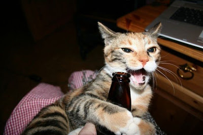 قطط بتحب البيره