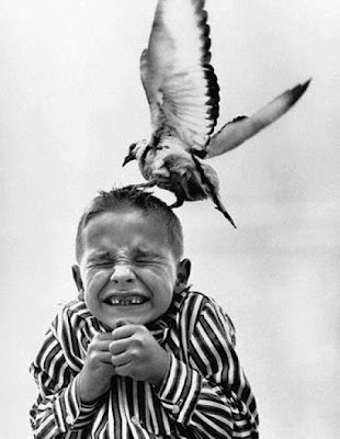 Bothersome Birds ~ Damn Cool Pictures