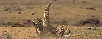 [Image: Leopard_Croc_Fight_09.jpg]