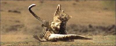 [Image: Leopard_Croc_Fight_08.jpg]