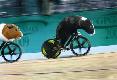 [Image: Animal_Olympics_09.jpg]