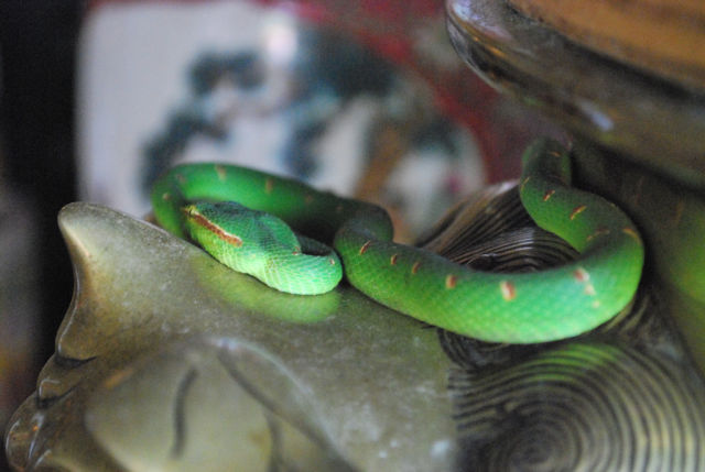 The Snake Temple Of Penang Malaysia Damn Cool Pictures