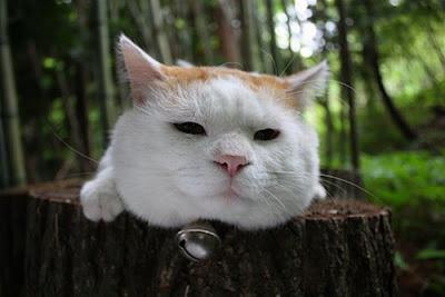 القطة الاكثر كسلا فى العالم