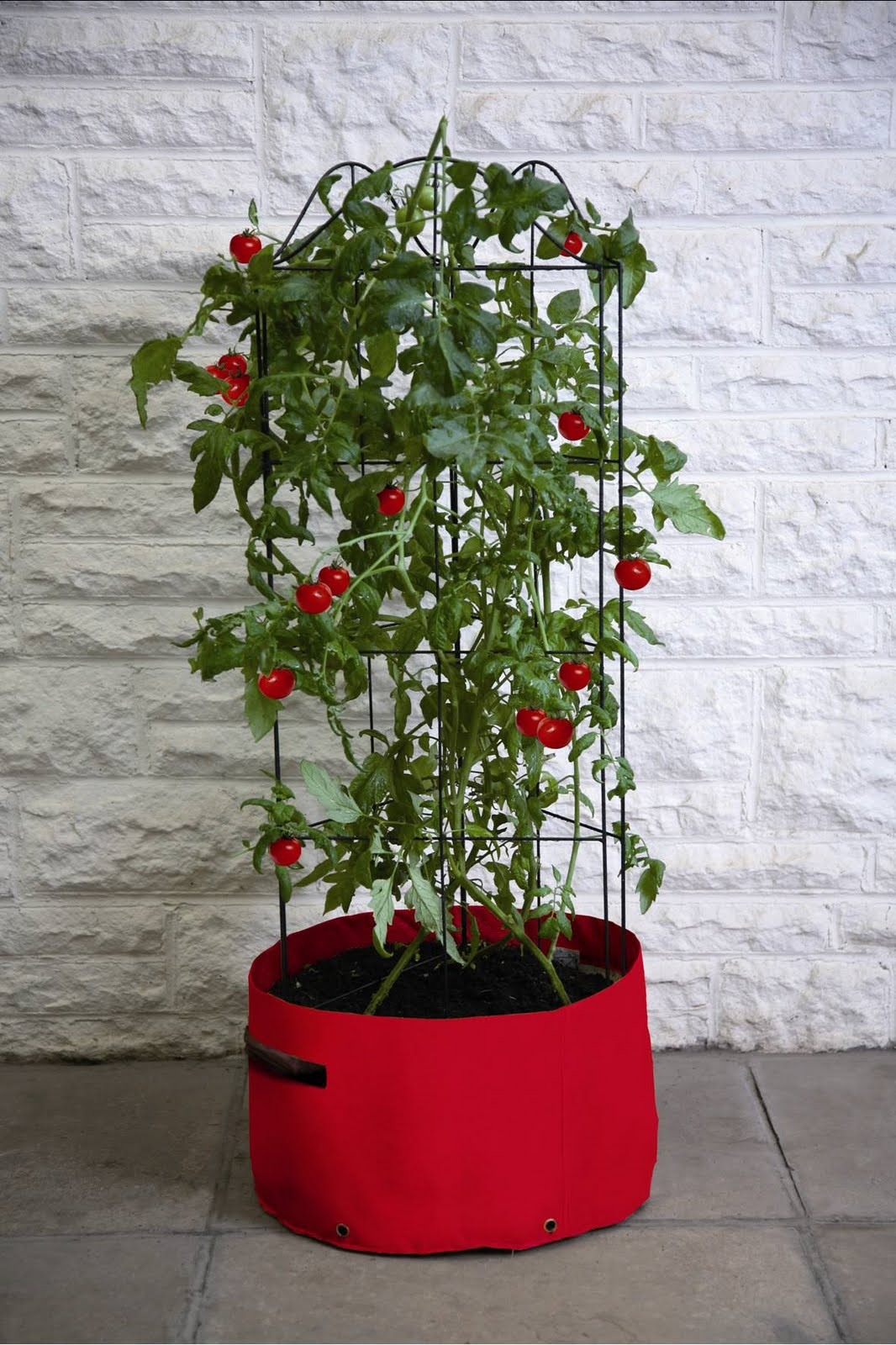 growing tomatoes in patio planters tips haxnicks. Black Bedroom Furniture Sets. Home Design Ideas