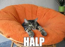kat needs halp