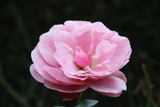 Jurrie Teeuwen: november 2008