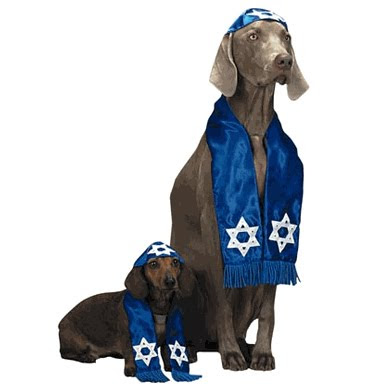 Inappropriate Halloween Costumes Dog Shalom Rabbi Halloween Costume