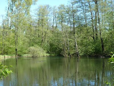 Stadtpark, Hamburg, Teich