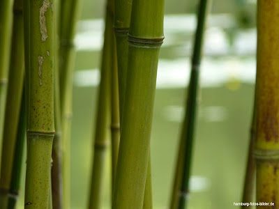 Bambus, Botanischer Garten, Hamburg