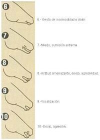 Prosztatagyulladás kezelésére emberek, Krónikus prosztatagyulladás kezelése