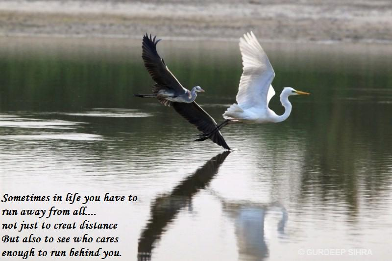 Motivational Morning Quotes, Famous Inspirational Thoughts ...