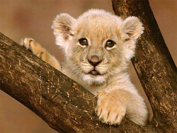 Hot Fresh Pics The Cutest Baby Animals